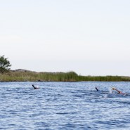 Blåkulla Swimrun öppen träning